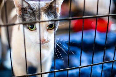 Cat in a Crate for Evacuation or Rescue - Family Pets Need Evacuation