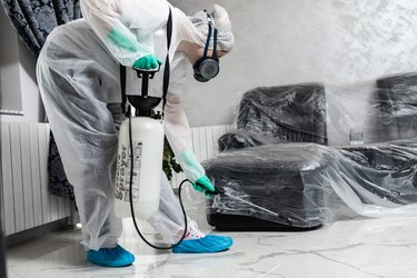 Preparing Your Home for Pest Control Treatment — Everything You Need to Know