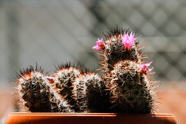 Close-Up Of Cactus Plant In Pot