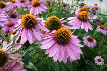 7 Tips to Maximize Flower Buds and Extend Blooms
