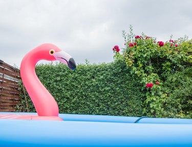 Großer Flamingo in Gartenpool