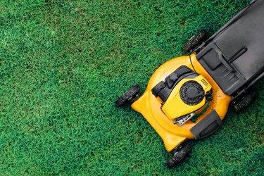 Yellow lawn mowers cut green grass.