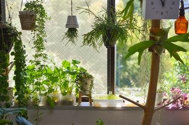 Window garden and houseplant