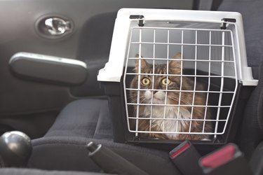 Cute Longhair Cat In A Pet Carrier Stands On The Passenger Seat In A Car.
