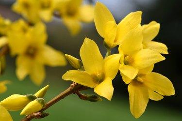 Easter Tree Blossom