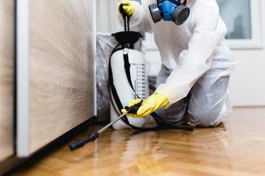Exterminator working in home kitchen