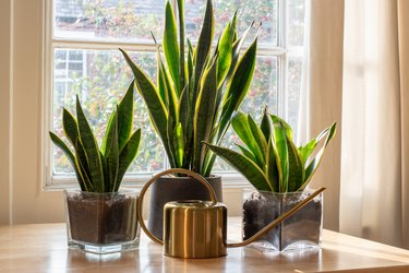 Indoor houseplants by the window inside a beautiful new house or flat