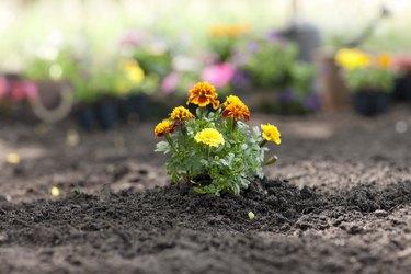 Soil Preparation for Flower and Vegetable Gardens