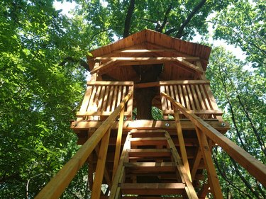 Treehouse in the forest