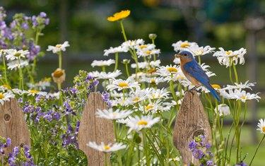 Creating a Bird-Friendly Garden at Home
