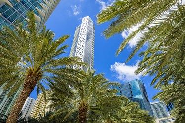 Downtown Miami Brickell
