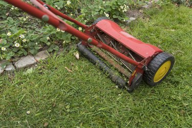 Push lawn mover in backyard