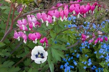 Various flowers in bloom in the garden