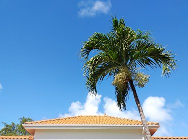 Tiled roof of Caribbean house with palm tree under tropical blue sky. Traditional French West Indies architecture and construction pattern.