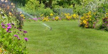 beautiful landscaped garden   watering in summer