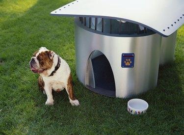 English Bulldog Puppy with Futuristic Doghouse