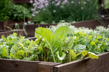 Everything You Need to Know About Container Vegetable Gardening