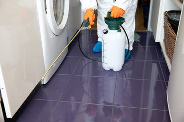 6 Questions to Ask Before Hiring Professional Pest Control