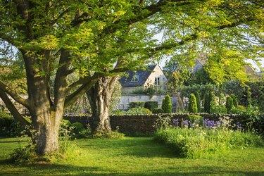 Garden with trees, lawn and purple Allium, drystone wall and buildings in the background.