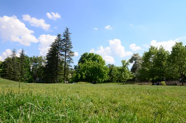 meadow surrounded by trees