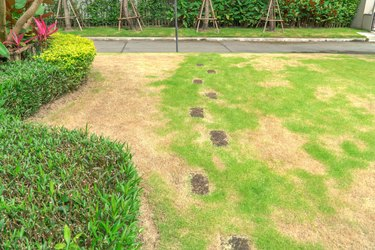 The lawn in front of the house is disturbed by pests and diseases causing damage to the green lawns, lawns in poor condition and requiring maintenance.