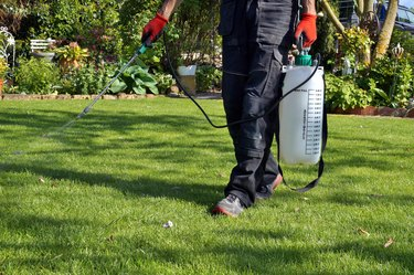 The Best Time of Day to Apply Weed Killer