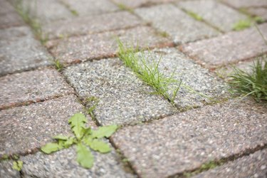 Grass growing through cracks in patio