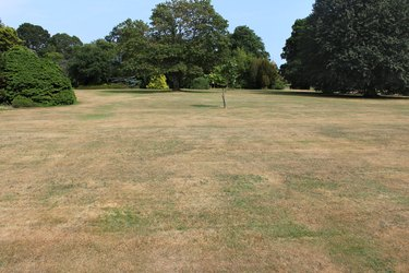 Dead grass on brown lawn, drought, hot dry summer weather