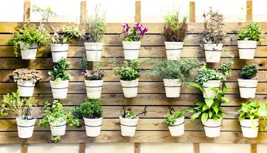 Plants variation in pots wall mount