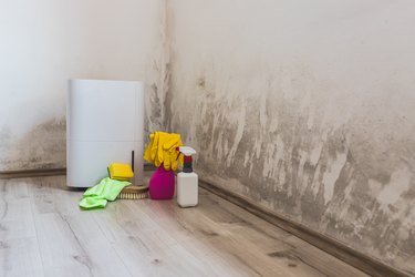 Black mold in the corner of room wall, dehumidifier and spray bottle with mildew removal products.