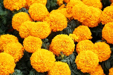 Close-Up Of Yellow Flowers In Market