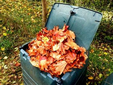 Leaves in compost bin