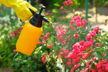 Is It Safe to Use Pesticides? Here's What You Should Know