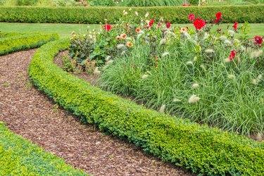 Garden path with bark mulch