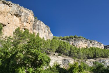 Pine trees and mountain wall in the Sierra de Cuenca
