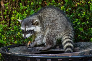 What Is Humane Pest Control? What You Need to Know About this Non-Trap, No-Kill Approach