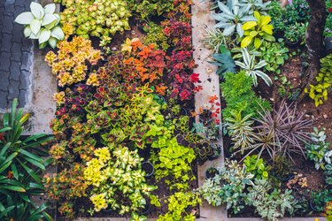 High Angle View of Garden trees