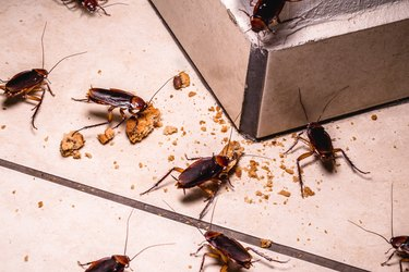 The 9 Grossest Bugs in Your House — And How to Get Rid of Them