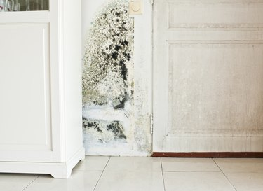 Does Your Homeowners Insurance Cover Mold Damage?