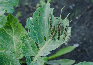 A Beginner's Guide to Managing Garden Pests