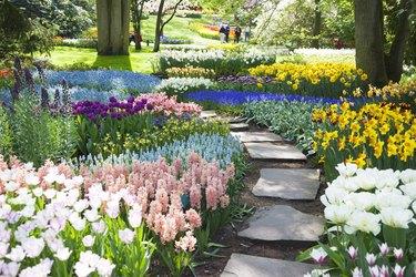 Garden flowers # 53 XXXL