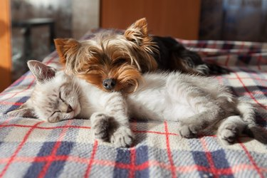 How to Keep Pets Safe — The Essential Guide to Pet Safety at Home