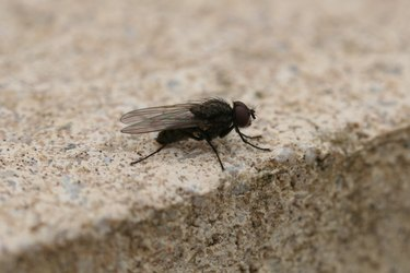 Close-Up Of Housefly Outdoors