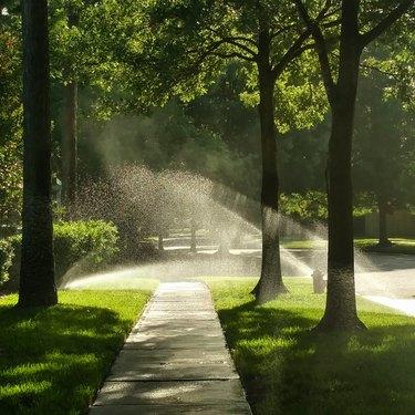 Morning Sunlight through Sprinklers
