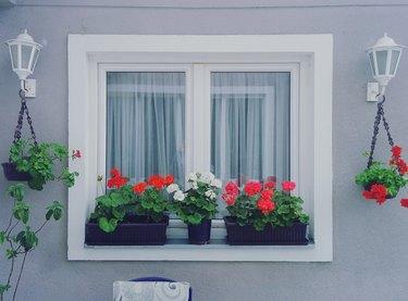 Flowers Growing On Window Sill