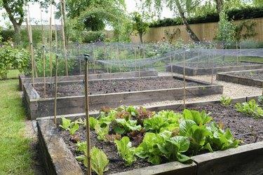 Homegrown vegetables, vegetable patch in a garden, UK