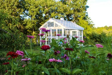 Gorgeous Victorian style greenhouse in a garden of zinnias