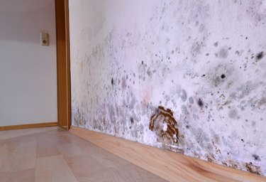Mold Growth in the Home: Everything You Need to Know