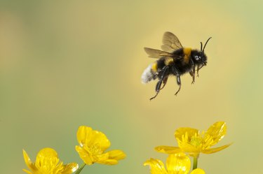 I've Found a Hive of Bees at My House: Now What?