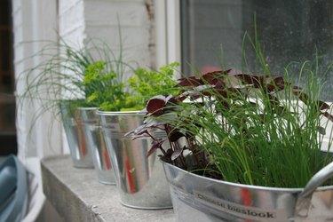 Herbs on a window sill